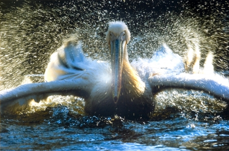 Fotografia dzikiej przyrody 2005 – Wildlife Photographer of the Year